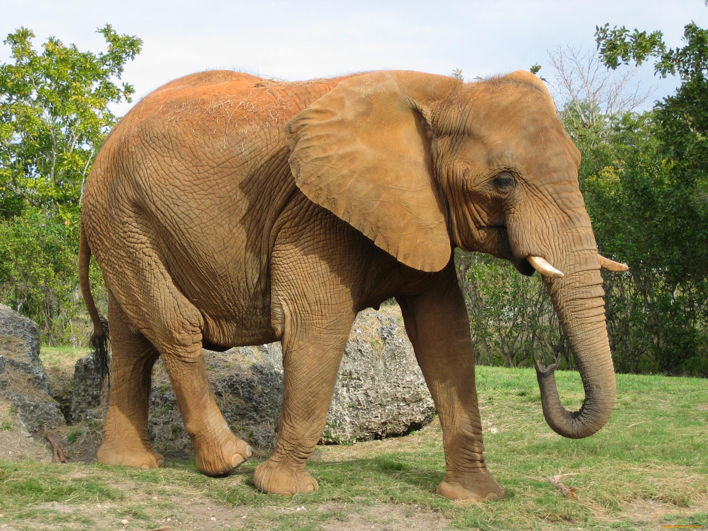 картинка самого большого животного элемент